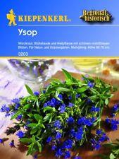 Kiepenkerl - Hysope 3203 würzkraut, blühstaude & plante médicinale pluriannuel