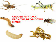 More details for reptile live food locusts, crickets, mealworms, morio worms, waxworms fruit fly