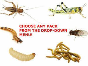 Reptile Live Food Locusts, Crickets, Mealworms, Morio Worms, Waxworms Fruit Fly
