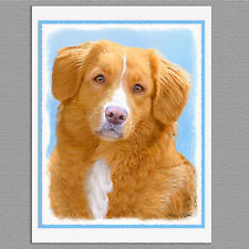 6 Nova Scotia Duck Tolling Retriever Blank Art Note Greeting Cards