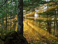 NATURE PHOTO SUNBEAMS FOREST TREES LARGE WALL ART PRINT POSTER PICTURE LF2056