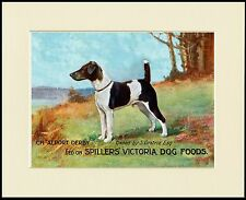 SMOOTH FOX JACK RUSSELL TERRIER DOG FOOD ADVERT  PRINT MOUNTED READY TO FRAME