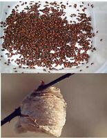 1500 Premium Fresh Live Ladybugs with Free Preying Mantis Egg Case Think Fresh!