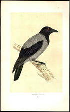 HOODED CROW bird1866 original vintage painted woodblock print