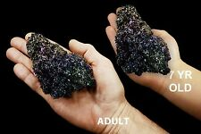 "Carborundum 3""-6"" 8-11 Oz All Chakra Healing Crystals and Stones Silicon Carbide"