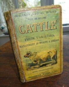 1900 CATTLE THEIR VARIETIES & MANAGMENT IN HEALTH & DISEASE ILLUSTRATED COWS ^