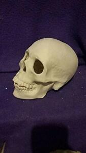 """Skull Realistic Human 7"""" Ceramic Bisque, Ready to Paint"""