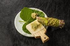 RARE 20 graines de VRAI WASABI JAPONAIS(Eutrema japonicum)T03 WASABI PLANT SEEDS