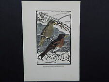 BIRDS, ERIC FITCH DAGLISH, Engraving, c. 1948 Bramblefinches or Bramblings #23