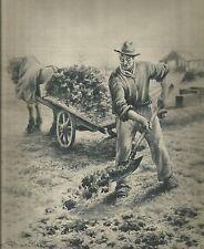 K0370 Agricoltore concima il prato - Carretto - Cavallo - Stampa antica