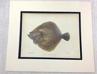 1904 Antico Pesce Stampa Rombo British Sale Acqua Pesca Cromolitografia