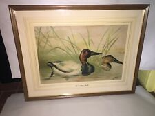 Antique Alexander Pope Jr Chromolithograph of A Canvasback Ducks Ca. 1890's 1900