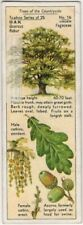 European English Oak Tree Quercus robur 1930s Trade Ad Card