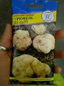 Gourmet WHITE TRUFFLE Mushroom Mycelium Seeds/Spawn/Spores in Substrate