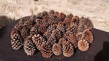 Lot de 25 pommes ou pignes de pin naturelles de 11cm à 16cm A décorer