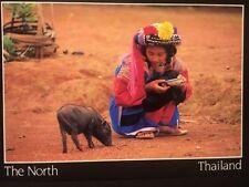 Lisu Tribe Girl Feeding A Pig Art Media Postcard Thailand