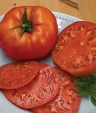 Organic Tomato-Beefsteak 25+ Seed Very large and juicy great sandwich tomato!