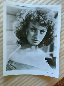 Sophia Loren, original vintage press headshot photo c