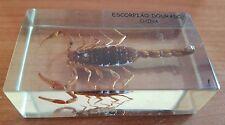 Vintage Golden Scorpion China Specimen in Perspex Holder Outsanding Item