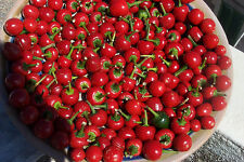 SWEET PEPPER RED CHERRY 100 FINEST SEEDS