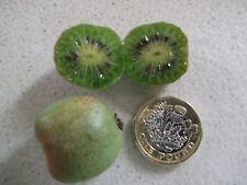 Hardy Kiwi issai-Mini Kiwi - 50 graines