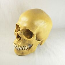 New COOL Yellow Resin Replica 1:1 Life Size Human Anatomy Skull