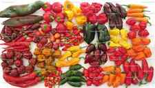 Chili Set 20 Sorten mild bis ultrascharf  Weltrekord Carolina Reaper Samen