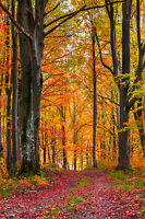STUNNING AUTUMN FOREST LANDSCAPE CANVAS #407 WALL HANGING PICTURE ART A1