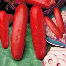 30Pcs Hot Peculiar Red Cucumber Seeds Vegetable Seed Home Garden Greenhouses New
