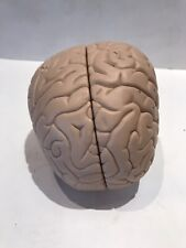 Scientific Brain Model Two Pieces