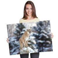 A1 - Cougar Mountain Lion Puma Cat Poster 60X90cm180gsm Print #21397