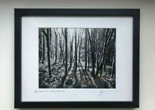 Sunlight Through the Trees, Oregon, B&W Photograph, 11x 14 Framed, Artist Signed