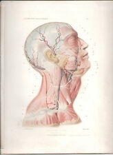 Antique Print-HUMAN ANATOMY Head and Neck, superficial plane ANGER 1869