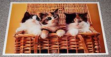Vintage kittens CATS IN A BASKET Photo Poster 1979 C/C Sales