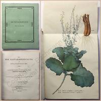 Wiegmann Über die Bastarderzeugung im Pflanzenreiche 1828 Botanik Pflanzenkunde