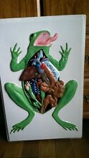 Amphibian Frog Anatomical Model / Structure (3D texturized Poster)