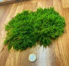 More details for organic java moss aquarium plant from sustainable source fry shrimp hide
