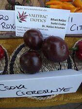 Chocolate Cherry Paprika - 10+ Samen - MILD und SCHÖN!