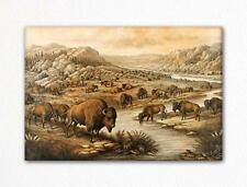Buffaloes at Rest Illustration Fridge Magnet