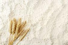 5 kg Weizenkleber Weizengluten Seitan Brot Backen Weizen Weizeneiweiss Vital