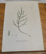 1832 Medicinal Plant Print/SODA ASH,OR COMMON GLASSWORT,or SALICORNIA HERBACEA