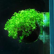 5pcs Crystal Glass Planter Aquarium Tank Aquatic Plant Cup Pot Home Decor