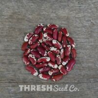 Shelling Bean - Jacob's Cattle - 50 Seeds + Free Gift