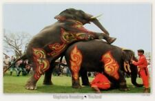 postcard THAILAND 🐘 ELEPHANT elephants BREEDING SHOW #10 animals post card