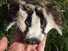 REAL BADGER FUR SKIN PELT with CLAWS Face RUG Taxidermy