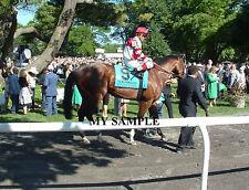 NORMANDY INVASION 8 by 10 PHOTO 2014 THE METROPOLITAN Horse Race BELMONT PARK #2