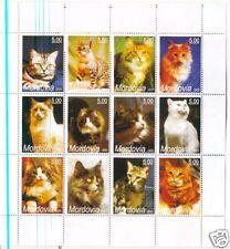 GATTI  - CATS MORDOVIA 2005 2