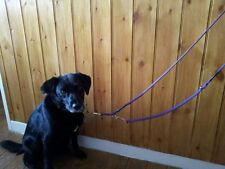 MULTI PURPOSE TRAINING LEAD CAN BE USED WITH HEADCOLLAR HALTI PAWS 2 LEAD