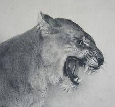 ARMAND BOUXIN, superbe lionne rugissant, étude, Art Déco, LITHOGRAPHIE, 1956 .