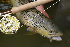Instructional Fly Fishing, LEARN THE BASICS OF FLY FISHING training on DVD